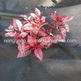 Tela tecida PP agricultural do controle de Weed das cores diferentes