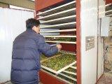 De Drogere die Machine van de doos voor de Bal van de Briketten van de Houtskool in China wordt gemaakt