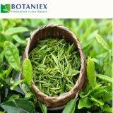 Естественная выдержка зеленого чая L-Theanine для напитка
