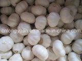 Aglio di bianco cinese con buona qualità