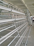 Poultry Equipment Chicken Cage Hot Sale em Nigéria, África