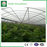 농업 야채를 위한 다중 경간 필름 온실