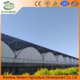 Multi Span Po Sistemas de Hidropónico de Plástico Invernadero Agrícola para Plantas y Hortalizas