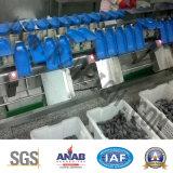 Pesador automático da verificação do SUS 304 da elevada precisão de C