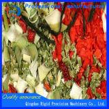 Les légumes, noix, fruits, herbes, mycètes, les légumes sauvages ont déshydraté et ont séché le dessiccateur multicouche de courroie de maille