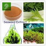 Extrato Fucoxanthin da alga, pó do extrato da alga, extrato da alga de Brown, extrato Fucoidan da alga de Brown
