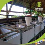 Schwein-Bauernhof-Entwurfs-Geräten-Absetzenstall Qingdao-Deba für Verkauf