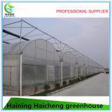 Qualitäts-Tunnel-Gemüsegewächshaus-heiße Verkäufe