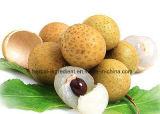 Haute qualité Longan Aril PE, Longan Aril Extract Powder