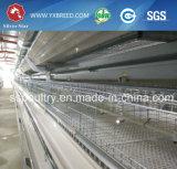 4 jaulas del huevo del pollo de las gradas con el sistema automático