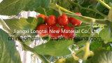 Guita/cuerda estables ULTRAVIOLETA de la pimienta de la guita del tomate