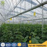 Única extensão/multi estufa do arco da película plástica da extensão para o tomate