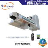 La pianta economizzatrice d'energia si sviluppa chiara, indicatore luminoso della pianta di 400W 600W 1000W CMH/HPS