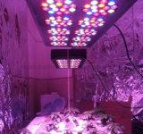 La pianta medica LED di alto potere 450W si sviluppa chiara per sviluppo dell'interno (Apollo 10)