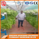 Landwirtschafts-Hydroponik-Gemüsegarten-Plastikfilm-grünes Haus
