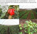 Sviluppo del pepe che promuove con il fertilizzante del terreno di Ungrow