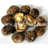 I vari formati di buona qualità secchi lisciano il fungo di Shiitake