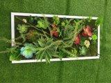 Plantes et fleurs artificielles de la centrale succulente Gu-SD-15117