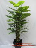 구 Mx 타로토란 180cm의 베스트셀러 인공적인 플랜트 그리고 꽃