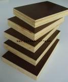 Madera contrachapada Shuttering para la construcción/la madera contrachapada Shuttering