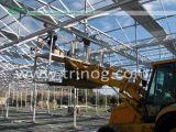 Invernadero de cristal de la flor en la estructura del venlo para la venta