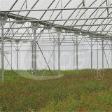 Fábrica que vende el invernadero de Turnel de la película plástica con temperatura constante y humedad