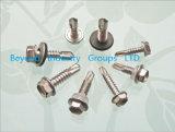 Selbst, der Screw/Roofing Screw/Tek Screw/Stainless Stahlselbstbohrende Schraube bohrt