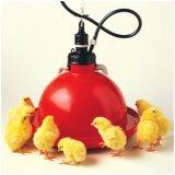 Bebedor de Waterer da galinha de Plasson usado na casa da exploração avícola (plástico)