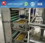 가금 장비 사용 최신 전기 요법 H 유형 층 감금소