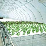 Casa verde del Multi-Palmo de la Doble-Película