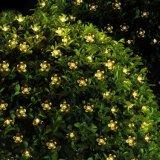 Éclairage solaire à fleurs colorées étanches à haute qualité