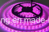 LED 5050 30LED Strip Light