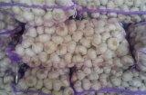 Nuovo aglio di Laiwu del raccolto
