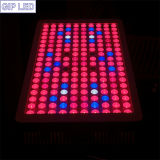 600W 900W 1000W Panel LED Grow Lights für Veg/Bloom Growing