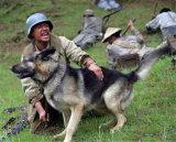 De leer Geweven Leiband van de Hond van de Halsband