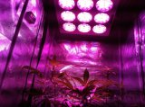 Full all'ingrosso Spectrum 300W LED Grow Light