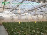 Kirsche Tomato Greenhouse für Wasserkulturbearbeitung