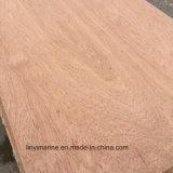 Face d'eucalyptus de qualité et faisceau arrière de Combi de contre-plaqué