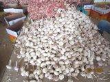 Grande aglio bianco normale del nuovo raccolto 2017