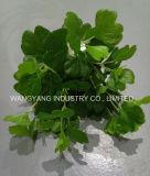 Immergrüne künstliche synthetische gefälschte Rot-Blätter
