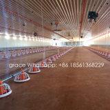Strumentazione automatica dell'azienda avicola per produzione della griglia