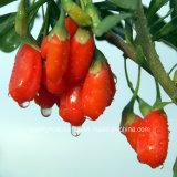 最もよい中国からの品質によってGojiの乾燥される果実