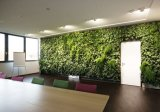 Piante di alta qualità e fiori artificiali della parete verde Gu-Wall05183035