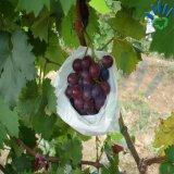 Os PP giraram a tela não tecida bond para sacos da fruta da uva