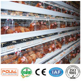 가축 농장 (유형 프레임)를 위한 새로운 최신 담궈진 직류 전기를 통한 층 닭 감금소