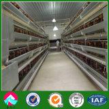 El tipo aves de corral del túnel acoda la granja de pollo de la jaula/la casa de la granja avícola/de la granja