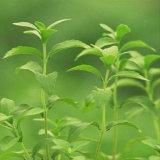 Het hete Verkopende Poeder Van uitstekende kwaliteit van het Uittreksel Stevia van de Levering van de Fabriek direct