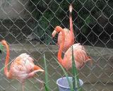 飼鳥園の網(鳥のステンレス鋼の金網のホーム)