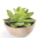 Succulent artificial do fornecedor de China para a decoração