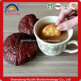 Фабрика гриба 12years 100% естественная ясная Ganoderma /Reishi